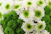 Green wedding flowers — Stok fotoğraf