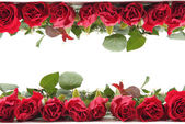 Fresh red roses as frame — Stock Photo