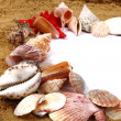 Sea shells in the sand — Stock Photo