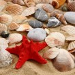 Summer sea shells in the yellow sand — Stock Photo