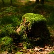 Stump with moss — Stock Photo #40450167