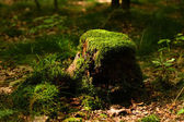 Stump with moss — Stock Photo