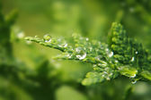 Water drops on the green leaf — Stock Photo