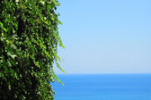 Green leaves and the sea  — Stock Photo
