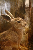 Rabbit — 图库照片