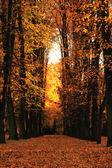 在公园的秋天 — 图库照片