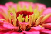 Violet flower detail  — Stock Photo