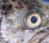 眼的鳟鱼 — 图库照片