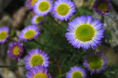 Early spring flowers — Stock Photo