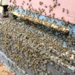 Detail of bee hive — Stock Photo #48087187
