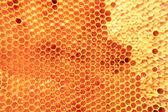 Bee wax with fresh honey  — Stockfoto