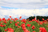 Wind power and red flowers — Stock Photo