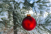 Red Christmas Ornament in Snowy Pine Tree — Stock Photo