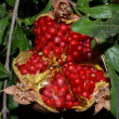 Stock Photo: Fruit Pomegranate