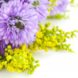 Beautiful bouquet of purple on a white background Chrysanthemum - Stockfoto