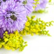 Beautiful bouquet of purple on a white background Chrysanthemum - Stock Photo