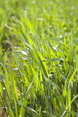заделывают из свежей травы толщиной. — Стоковое фото