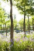 Bir alan pembe vahşi çiçekler ve ağaçlar — Stok fotoğraf