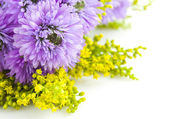 Beautiful bouquet of purple on a white background Chrysanthemum — Stock Photo