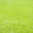 Fresh lawn grass background — Stock Photo