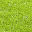 Photo: Fresh lawn grass background