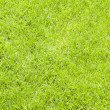 Fresh lawn grass background — Stock Photo #18954947