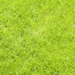 Fresh lawn grass background — 图库照片 #18954947