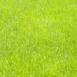 Fresh lawn grass background — Stock Photo #18954973
