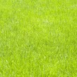Fresh lawn grass background — Foto de Stock