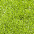 Fresh lawn grass background — 图库照片 #18954993