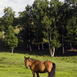 Horse on a pasture — Stock Photo #18956437
