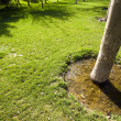 Lawn and tree — Stock Photo
