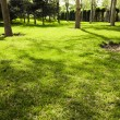 Stock Photo: Lawn in botanical garden with trees