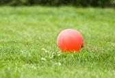 červený balónek v zeleném trávníku — Stock fotografie