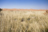 The reeds and desert — Stock Photo