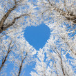 Winter landscape,branches form a heart-shaped pattern — Stock Photo