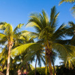 Coconut tree — Stock Photo #35041363