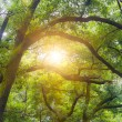 Sunshine through the forest — Stock Photo