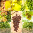 Collage of grapes and vineyard images — Stock Photo
