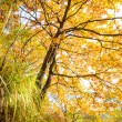 Autumn leaves background in sunny day — Stock Photo