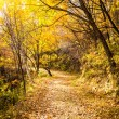 Stock Photo: Autumn Pathway