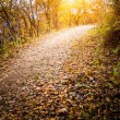 Autumn Pathway — Stock Photo #35088067