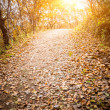 Autumn Pathway — Stock Photo #35088219