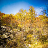 Autumn leaves background in sunny day — Foto de Stock