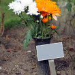 Memorial plaque and flowers in cemetery — Stock Photo