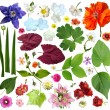 Set of plant elements - flowers and leaves. — Stock Photo