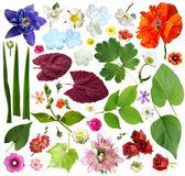 Set di elementi vegetali - fiori e foglie. — Foto Stock