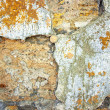 The texture of the old wall of the coquina cracked — Stock Photo