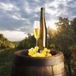 beyaz şarap ile natürmort — Stok fotoğraf
