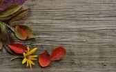 Autumn leaves on wood background — Stock Photo